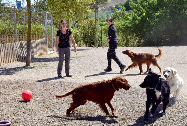 Los 39 hoteles caninos 39 a tope la rioja for Residencia canina la rioja