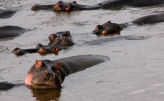 Un hipopótamo mató a un turista mientras le tomaba fotos (+detalles)