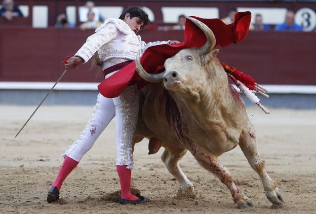 Fiestas De San Mateo 2018 El Toro De Domecq Domina En La Feria La